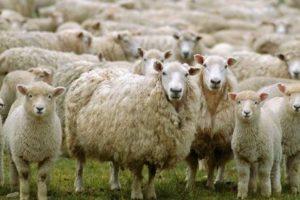 Осигурена е финансова помощ за животновъдите