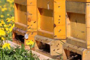 Започва приемът по новата програма по пчеларство