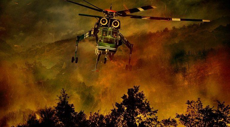 Какво предстои по мярка 8.3 за предотвратяване на щети по горите?