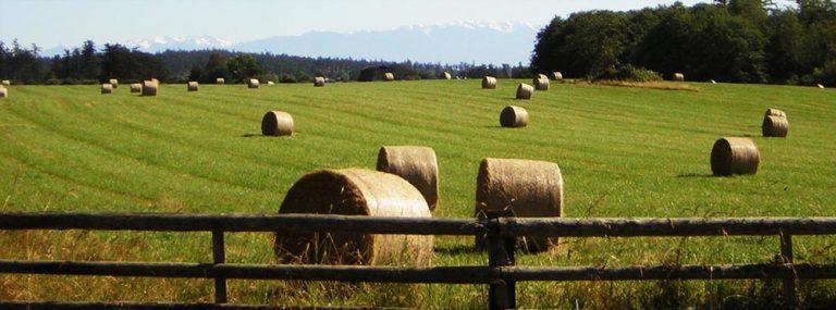 "ДФЗ одобри 43 проекта по мярка 4.1 ""Инвестиции в земеделски стопанства"""