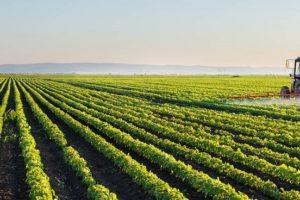 Земеделският бранш с обща позиция за бъдещето на Общата селскостопанска политика